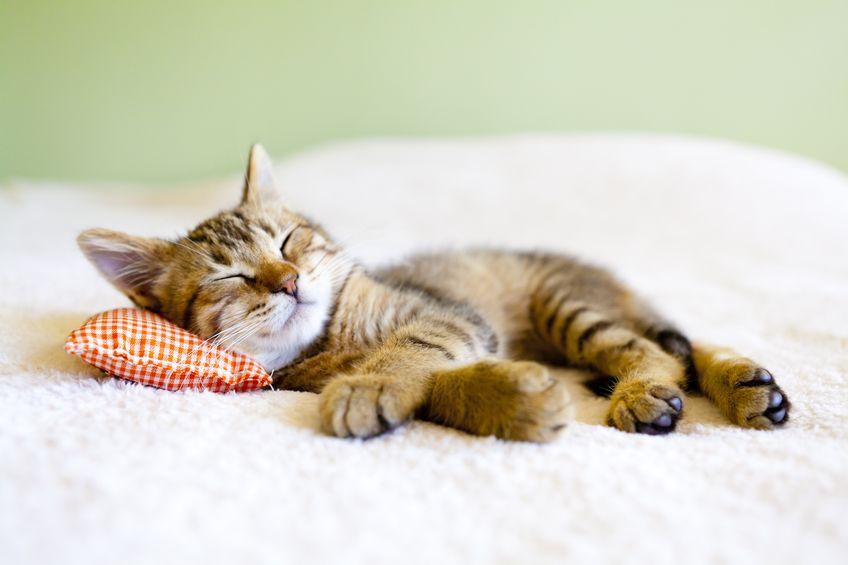 Atelier autohypnose: améliorer le sommeil